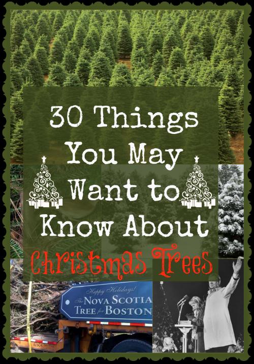 Christmas trees (30 Things)
