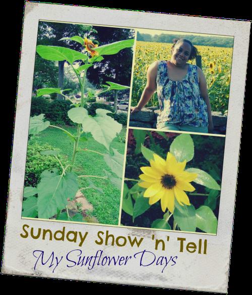 SSNTSunflowerdays