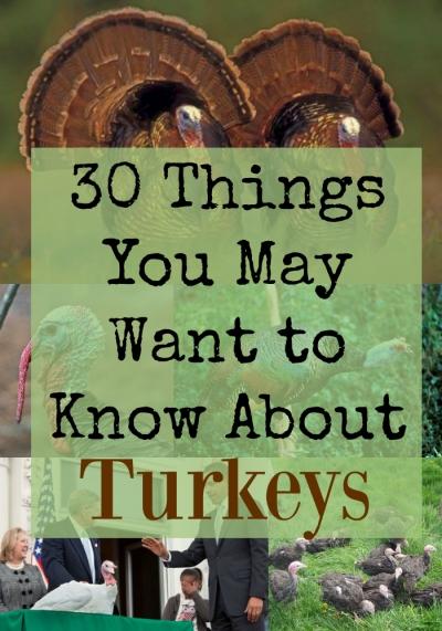 turkeys (30 things)